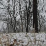 Hemlock Overlook, Hemlock, Adventure Links, Winter, Snoverit